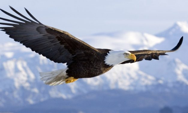 Men's Renewal – April 20th-22nd – Taking Flight/The Courage to Soar